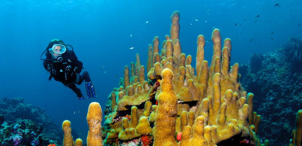 Scuba St Lucia Anse Chastanet's Own Dive Centre